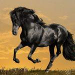 آشنایی با انواع نژاد اسب ها