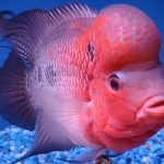 معرفی چند ماهی گوشتخوار