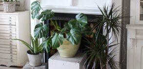 بهترین گیاهانی که عاشق سایه هستند