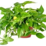 نحوه مراقبت از گیاهان آپارتمانی