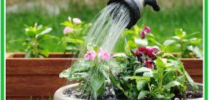 چرا گیاهان به آب احتیاج دارند