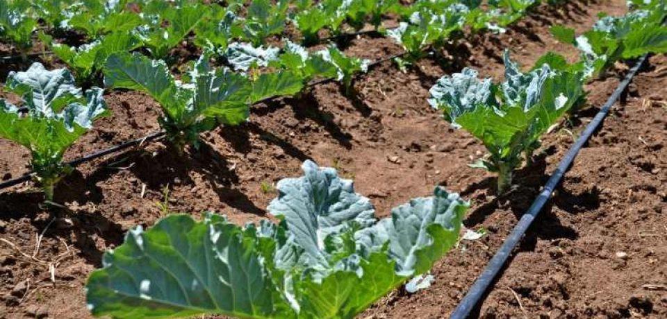 استفاده از لوله های پلی اتیلن در کشاورزی و آبیاری