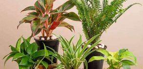 انواع گیاهان خطرناک